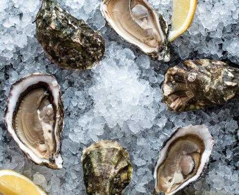 Austern fisch zegel burtscheid stilpunkte for Fisch essen aachen