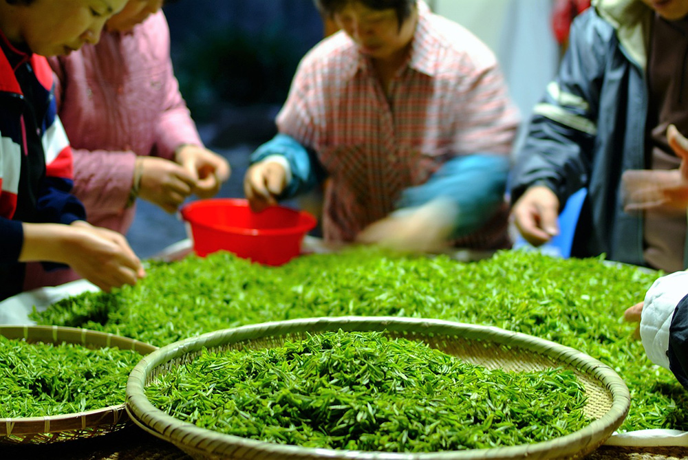 Stilpunkte: Grüner Tee, Qualität aus dem Teeladen durch Auswahl